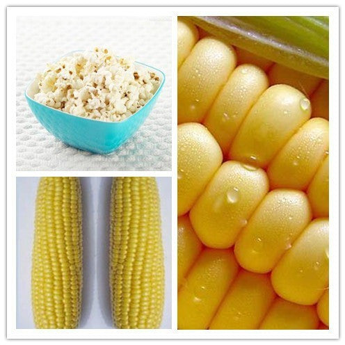 Corn seeds, popcorn, popcorn special corn - 50 particles
