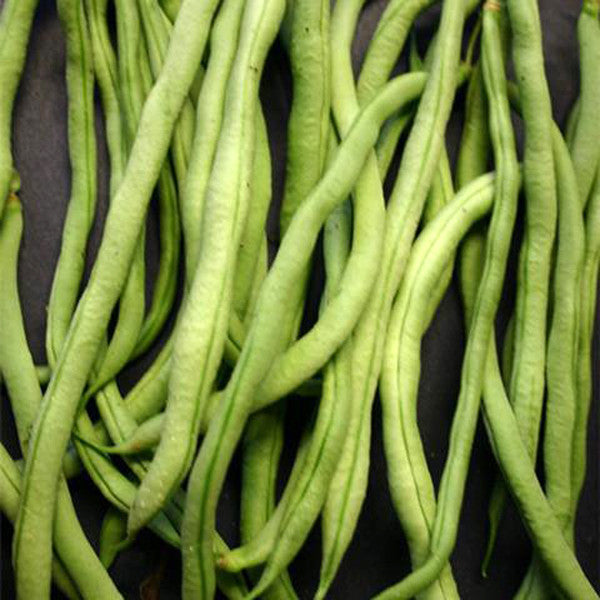 Fortex Pole Bean (30 seeds)