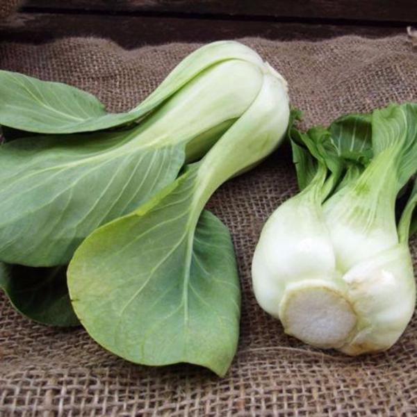 All year round 200pcs Chinese cabbage seeds
