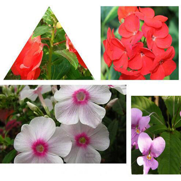 Red Impatiens Walleriana Flowers Seeds