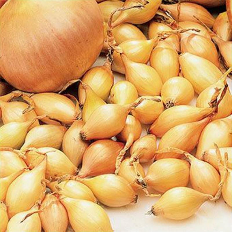 10 Ways To Style Your Very Own Vegetable Garden: Giant Yellow Onion Seeds