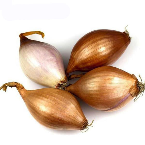 Organic Giant Onion Seeds
