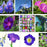 Blue Purple Mix Ipomoea Morning Glory Seeds