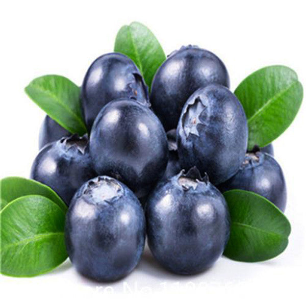Black Blueberry Seeds