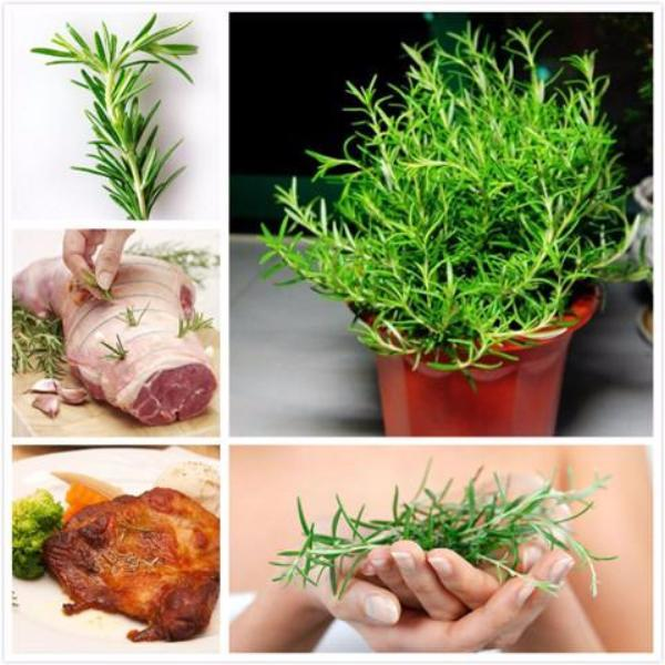 Rosemary (5 Seeds) - Rama Deals - 5