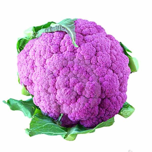 Purple Snowy Cauliflower Seeds