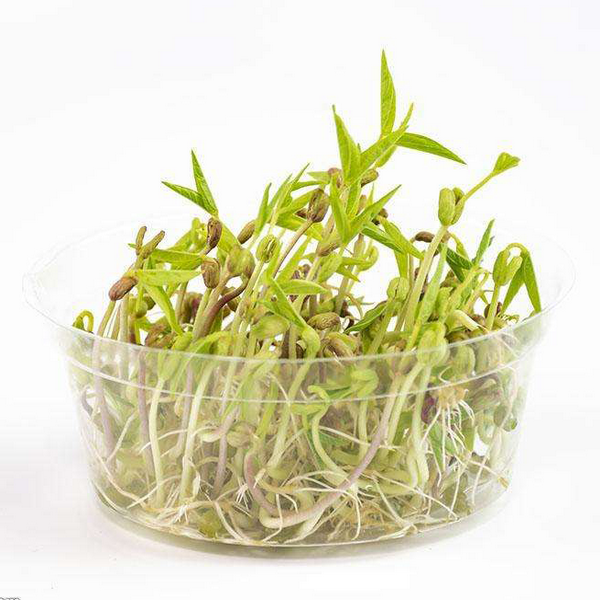 Green Bean Sprout Seeds