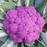Graffiti Dark Purple Cauliflower