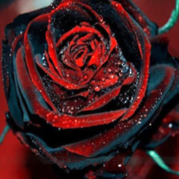 True blood black rose seeds jack seeds for How to make black roses