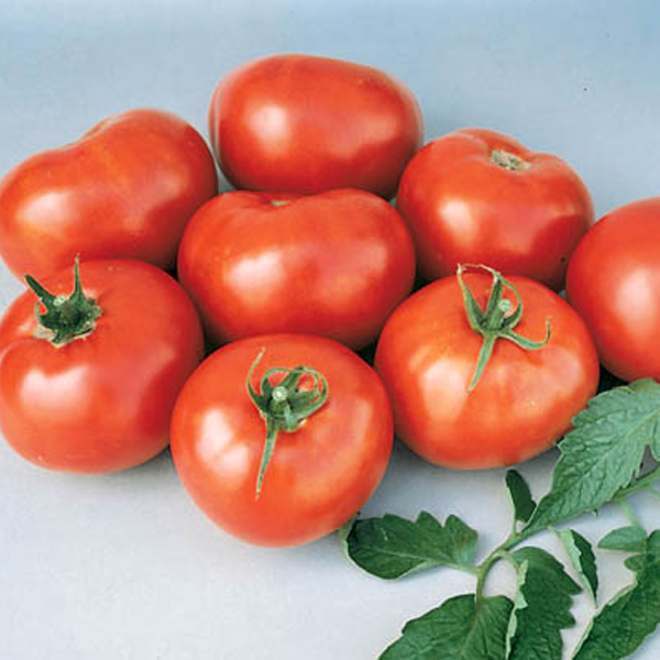 Better Boy Tomato Seeds
