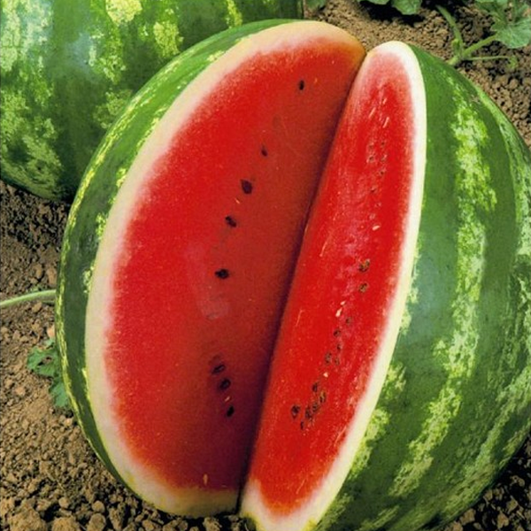 Crimson Watermelon Seeds