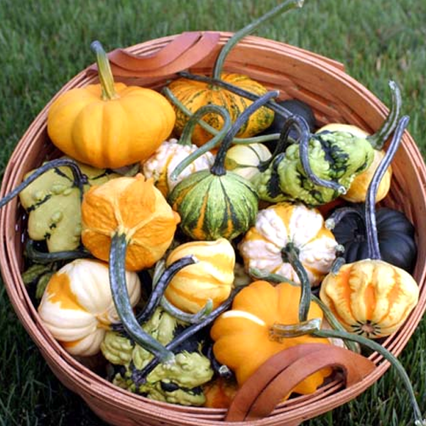 Decorative Gourd Seeds