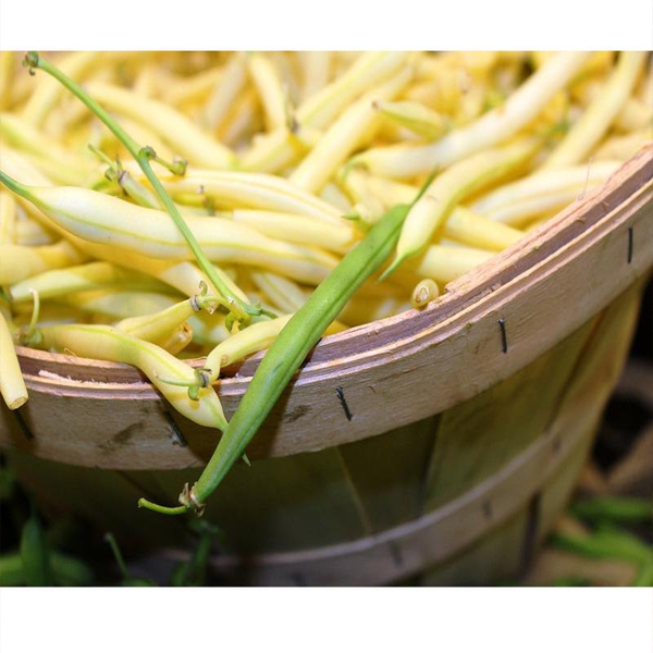 Dwarf Yellow French Beans