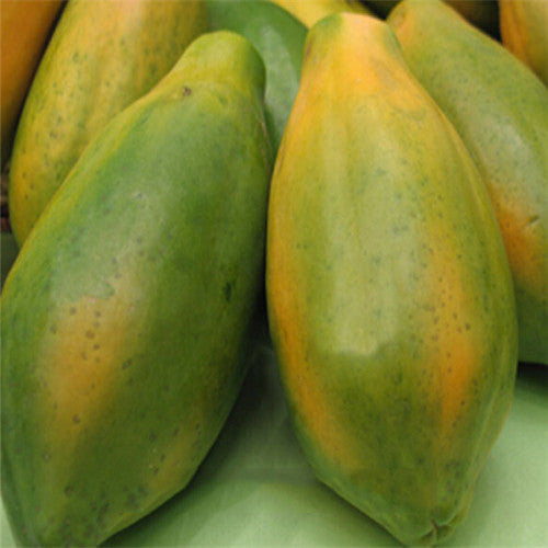 Green Layer Orange Papaya Seeds