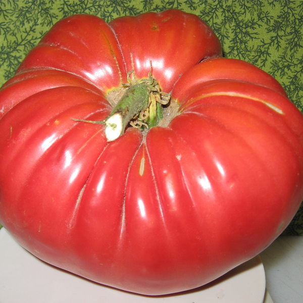 Giant Monster Tomato Seeds