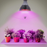 Indoor Plant Grow Light