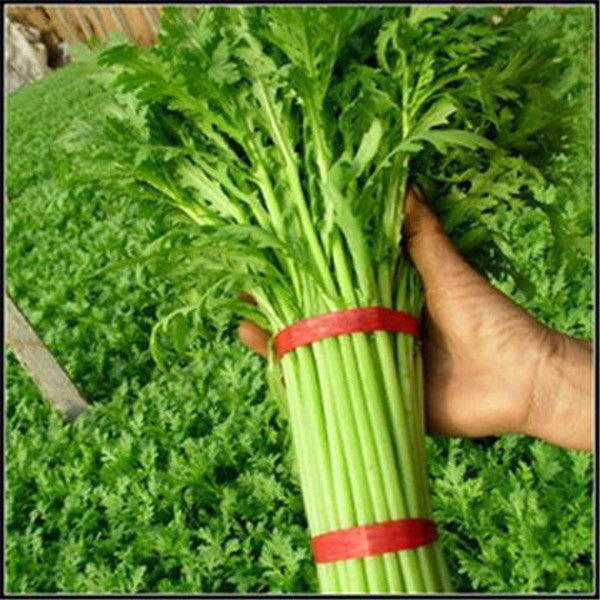 Hot Rod Organic Vegetable Seeds 100 PCS