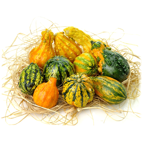 75 Per Pack Small Gourd Seeds