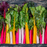 Five Color Swiss Chard Seeds