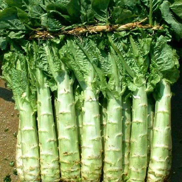 Italian Asparagus lettuce vegetable seeds