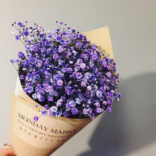 Purple Gypsophila Flower Seeds