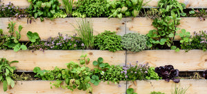 When to Use Fresh or Dried Herbs for Maximum Flavour