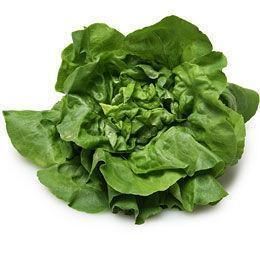 From Holland Vegetables Boston Lettuce