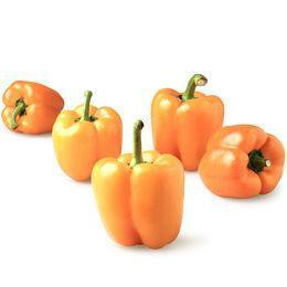 From Holland Vegetables Orange Capsicum-mini