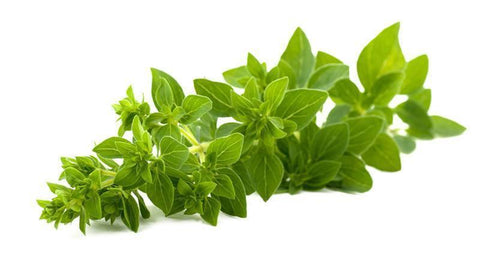 From Italy Vegetables Oregano