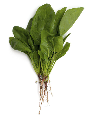 "From Lebanon Vegetables Hinduba Leaves "" kasini"""