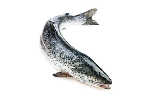 From Norway Seafood Farm-Raised Whole Salmon