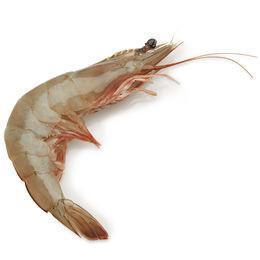 Buy Gulf Prawns, Trimmed, Head-On & Shell On - Medium Size | QualityFood.ae|Seafood |From Oman Online food delivery Dubai Abu Dhabi and Sharjah