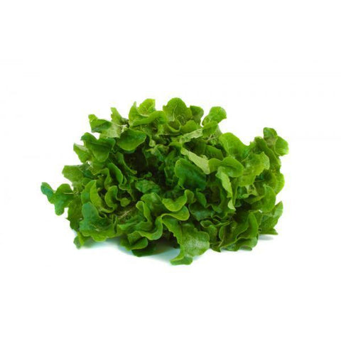 "From Qualityfood.ae Vegetables Oak Leaf "" Washed &  Ready to Eat"""