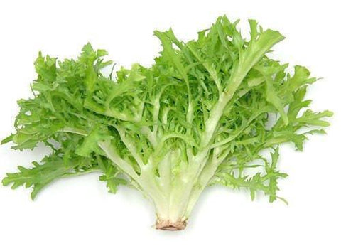 From Spain Vegetables Green Lettuce Frisee