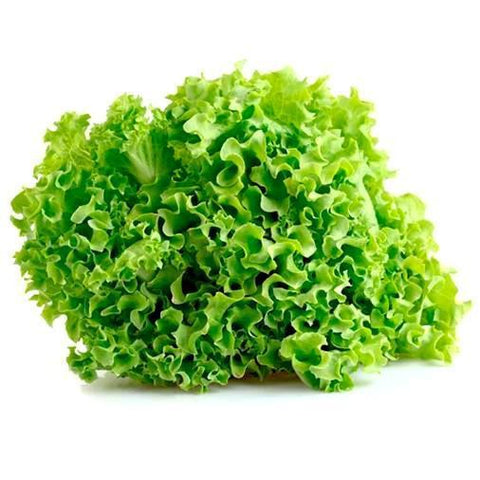 "From Spain Vegetables Lollo Bionda ""Green Leaf Lettuce"""