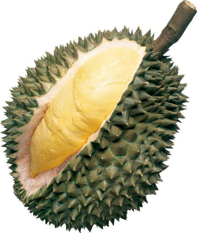 From Thailand Fruits Durian