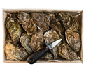 "Oysters number ""3"" St.Vasst - 48 Huitres Normandy"