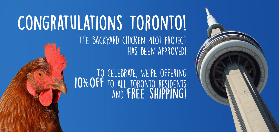 Toronto Backyard Chicken Pilot