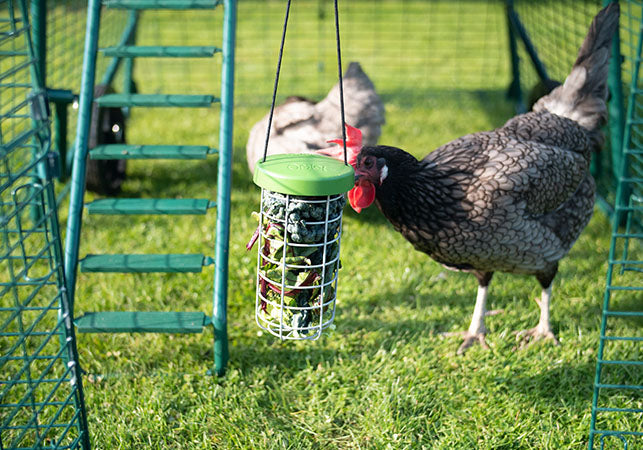 Caddi Chicken Treat Holder