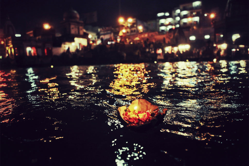 lotus by night