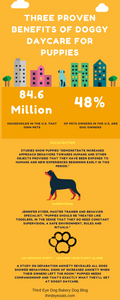 Infographic - Stop Leaving Your Puppy Anxious and Alone: Three Benefits of Doggy Daycare