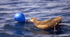 duck and balloon