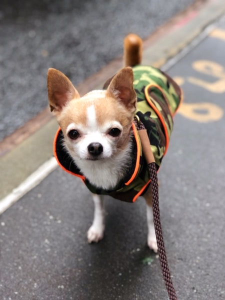 Zoomies Classic Coat  - Camouflage/Orange