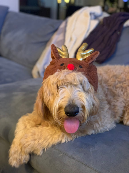Rudolph the Reindeer Hat