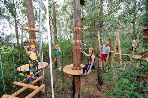 Treetop Adventure Terrigal