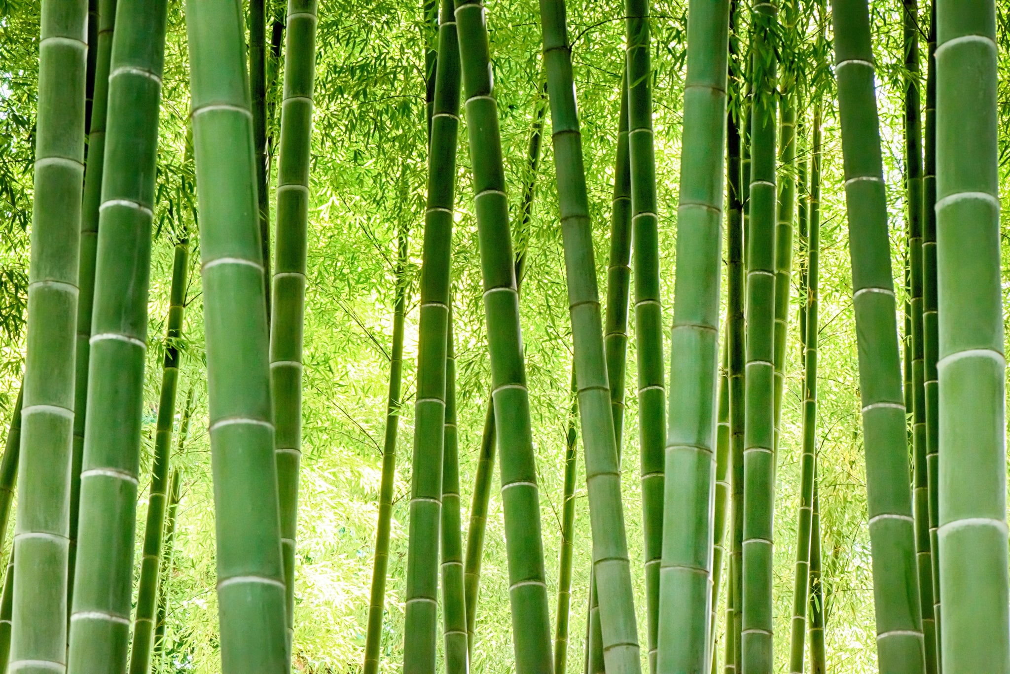 4 reasons to go green with bamboo