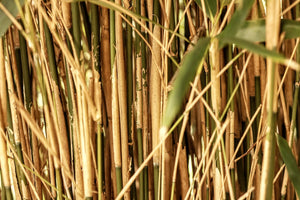How to Care for Your Bamboo Straws