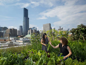What We Can Learn from Sustainable Farming - How to Start an Urban Farm