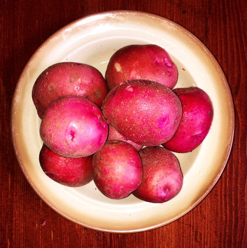 Organic Chieftain Red Potatoes