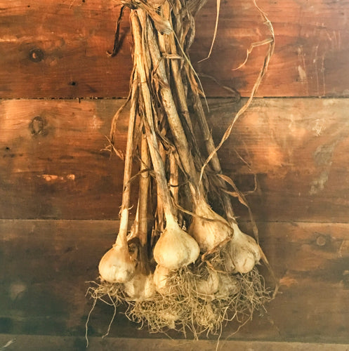 Certified Organic Garlic